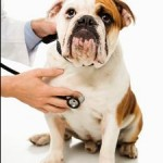 Diabetes Is A Serious Threat To Dogs