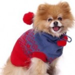 Tips For Selecting Costumes For Your Pet Puppy
