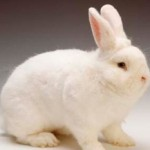 Pet Rabbits In A House Or Apartment