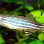How To Pick Up Best Fishes For Aquarium?