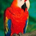Exotic Pets: Should They Be Banned From The U.S.?
