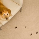 How To Stop Your Pets From Damaging Home Furnishings?