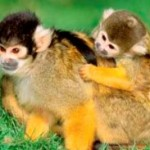 The Basic Facts And Care For Pet Monkey