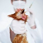 Dealing With Bird Flu And Keeping Your Pet Free From It