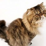 When Good Cats Go Bad - How To Curtail Your Cat's 'Bad' Behavior?