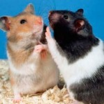 Hamsters Are Still A Firm Favorite For Kids