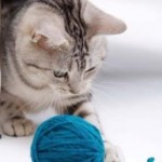 Dealing With Hyperactivity In Kittens