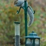 How To Keep Away Squirrels From Your Bird Feeder?