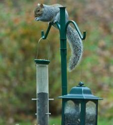 bird feeder
