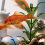 Dealing With Aquarium Leaks In Fish Tank