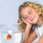 Goldfish Maintenance Tips For Children
