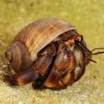 5 Tips When Considering Hermit Crab As Pet