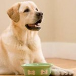Tips To Consider Homemade Pet Food