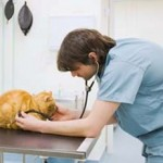Diagnosing A Cat With Feline Kidney Disease