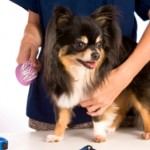 Be Aware Of Pet Health Hazards At The Groomer's