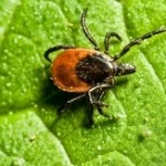 Products To Control Fleas And Ticks: Are They Harmful?