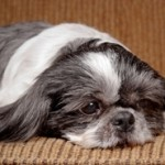 Fall May Drive Separation Anxiety In Pets