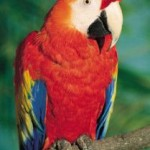 What You Should Consider Before Getting An Exotic Pet?