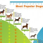 Top10 Most Popular Dogs In America