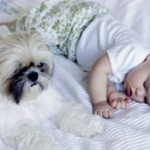 "How To Make Your Dog ""Baby Ready"" When It's Time To Bring The Newborn Home?"