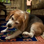 How to Stop Your Dog from Itching?