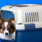 How To Crate-Train Your Dog?