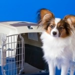 Crate Training Your Puppy: How To Correctly Crate Train Your Puppy?