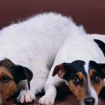 Allergies In Dogs: Symptoms And Treatment