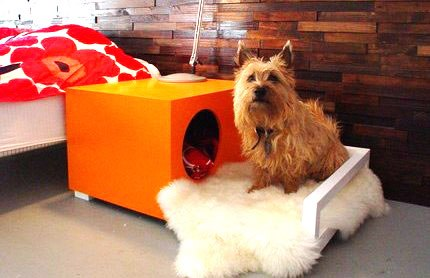 Unique Dog Bed Ideas
