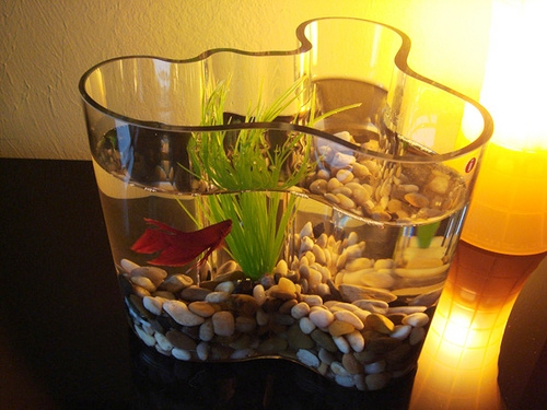 14 creative unique fish bowl designs the pets central for Fish bowl ideas