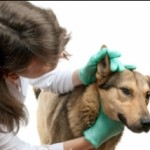 The Complications Associated With Canine Lymphoma