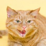 Cats With Aggressive Behavior Require Intelligent Reaction