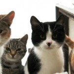 10 Most Popular Cat Breeds in The World