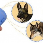 Smart Way To Get Rid Of Dog Training Problems