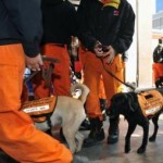 Rescue Dogs To Aid The Natural Disaster In Haiti