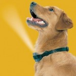 Excessive Dog Barking Solved With A Collar