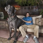 George The Great Dane – A Name Worthy For The King Of Dog Records