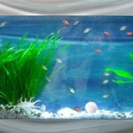 Tips And Tricks For A Charming In-Wall Aquarium