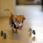 Hope For Two Legged Dogs
