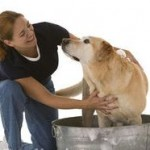 What You Should Know About Bathing The Dog?