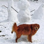 Dogs Have A Reason To Pee On The Snow