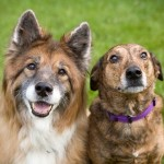 Penalty For Pet Abuse Protects People Too