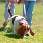 Walking The Dog Benefits The Owner's Health
