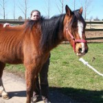 A Place Where Horses Can Find Rescue From Stormy Parts Of Their Life