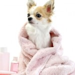 Benefits Of Using Hair Conditioner For Your Pets
