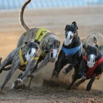 The Future Of Racing Hounds Uncertain Because Of Recession