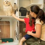 How To Look For Animals For Adoption?