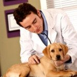 Common Allergies Among Pets