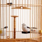 Bird Cage Accessories To Color Your Bird's Home