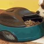 Do You Need An Automatic Dog Feeder?